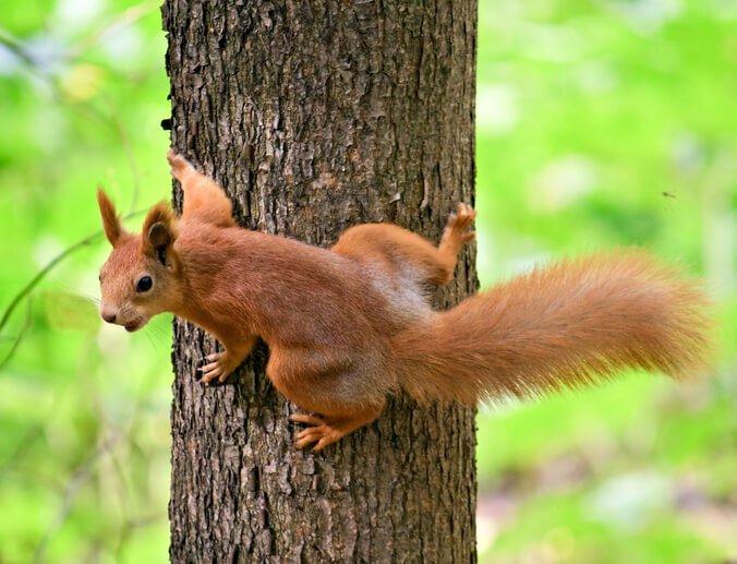 Squirrel Removal Scarborough