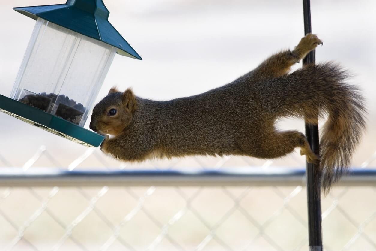 Squirrel Removal and Control Services